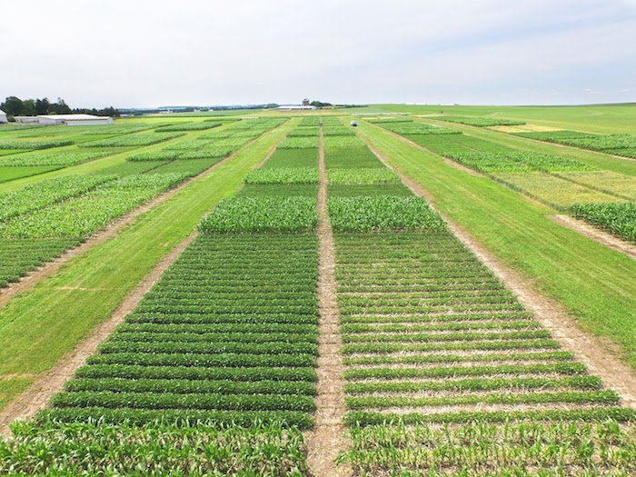 a field that has been divided into sections for crop rotation