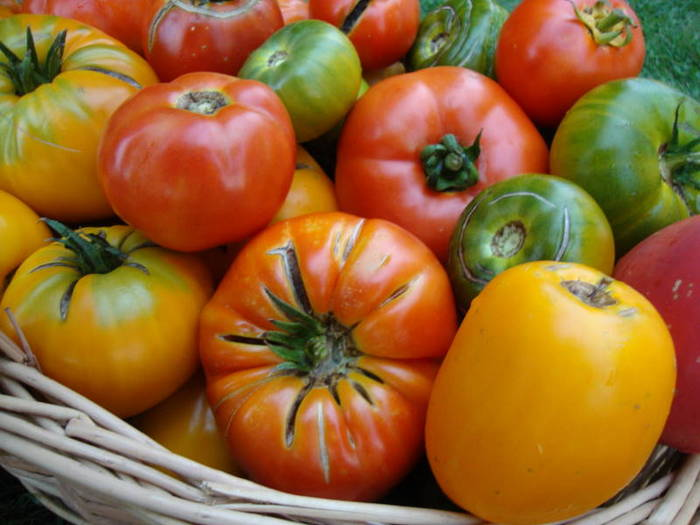 Red, green and yellow tomatoes from my garden