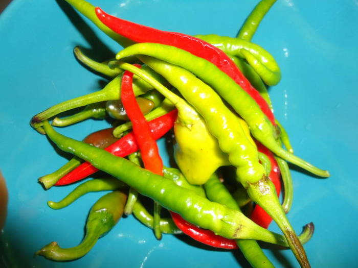 Green and red Romanian hot peppers