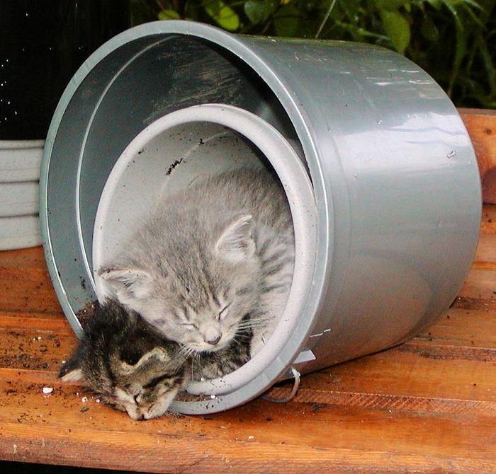 kittens in flowerpot