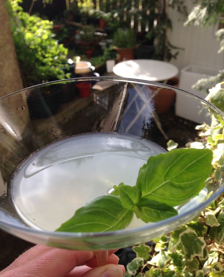 basil in a drink