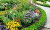 Garden with border
