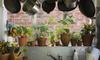 plants growing in pots by a kitchen window