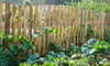 a pretty vegetable garden with a slat fence