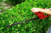 Trimming a hedge with an electric trimmer