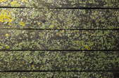 mildew on a deck