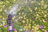 An impact sprinkler watering a lawn with a bed of small yellow and purple flowers.