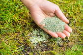 A hand holding grass seed over a patchy lawn.