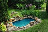A backyard pond.