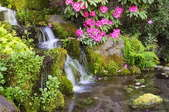 a bog with a waterfall and tropical flowers