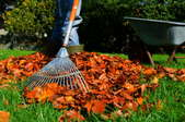 Close up of a rake collecting leaves in a pile.