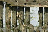 old rotted wood