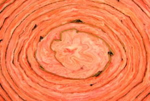 A close-up of a roll of pink, fiberglass insulation.