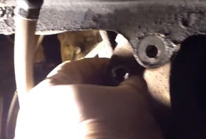 a hydraulic cylinder