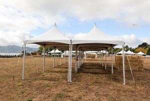 A series of white canopies are set up in the middle of a field for cover.