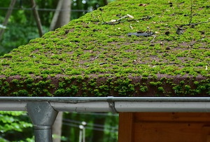 gutters against a green roof