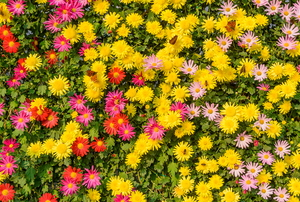 wall of bright flowers