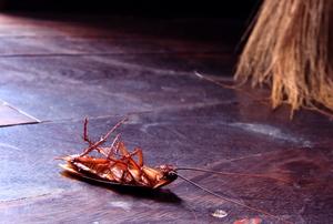 a dead roach on the floor