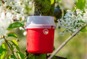 A red insect trap hanging in a tree.