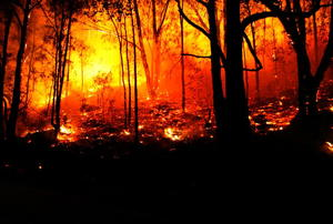A forest in the grips of a fire.