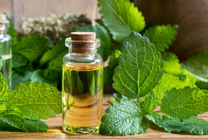 lemon balm and a jar of essential oil