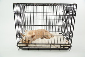 a tan colored dog inside a metal crate