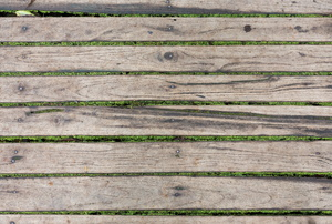 Deck with moss growing between the boards