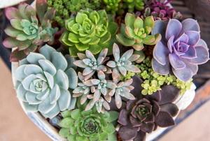Desert plants.
