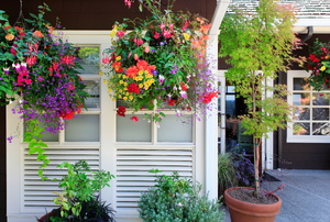 A patio with plants and a couple colorful hanging garden baskets.