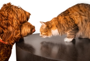 A dog and a cat look at each other.