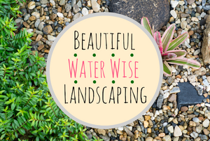 """A close-up image of gravel and plants and the words, """"Beautiful water wise landscaping."""""""