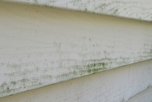 mildewing wooden exterior siding