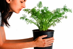 Woman smelling dill plant.