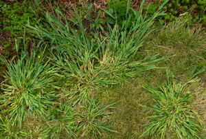 Weeds in the ground.