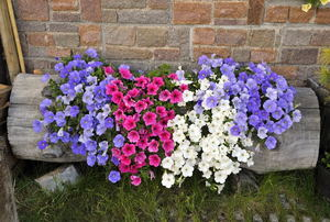 A rustic log planter with pink, purple, and white flowers in it.