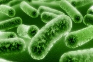 bacteria found in a wet basement