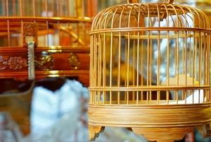 round bird cages