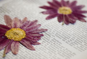 pressed flowers in book