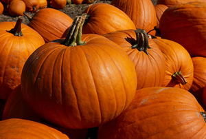 Pumpkin close up #2