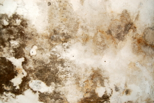 A thick growth of mold and mildew on a basement wall.