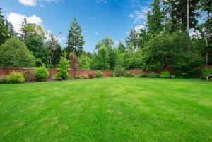 A green yard.