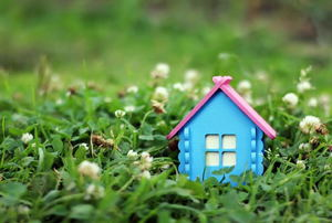 A small blue house in a field of clover.