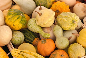 A collection of gourds in different shapes and fall colors.