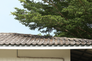 tiled roof with tree branch hanging over the top