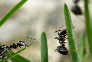 2 Causes of an Ant Infestation