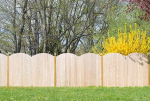 Wood fence in a yard