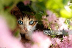 A cat outside.