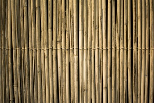 rows of bamboo