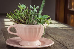 A pink teacup with succulents planted in it.
