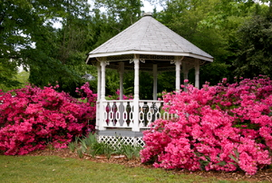 A gazebo next to pink flowers.